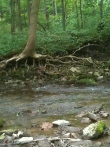 tree roots at the edge of the river