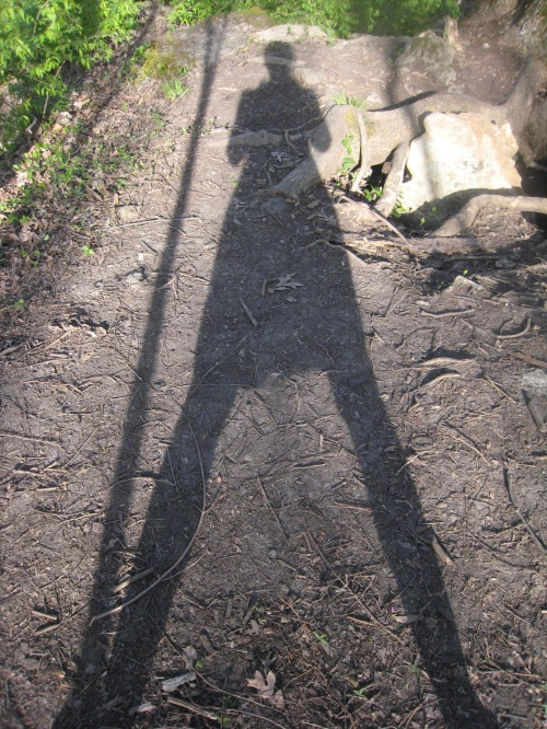 shadow of person on wooded trail