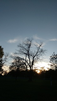 photo of Gaunt park at sunset