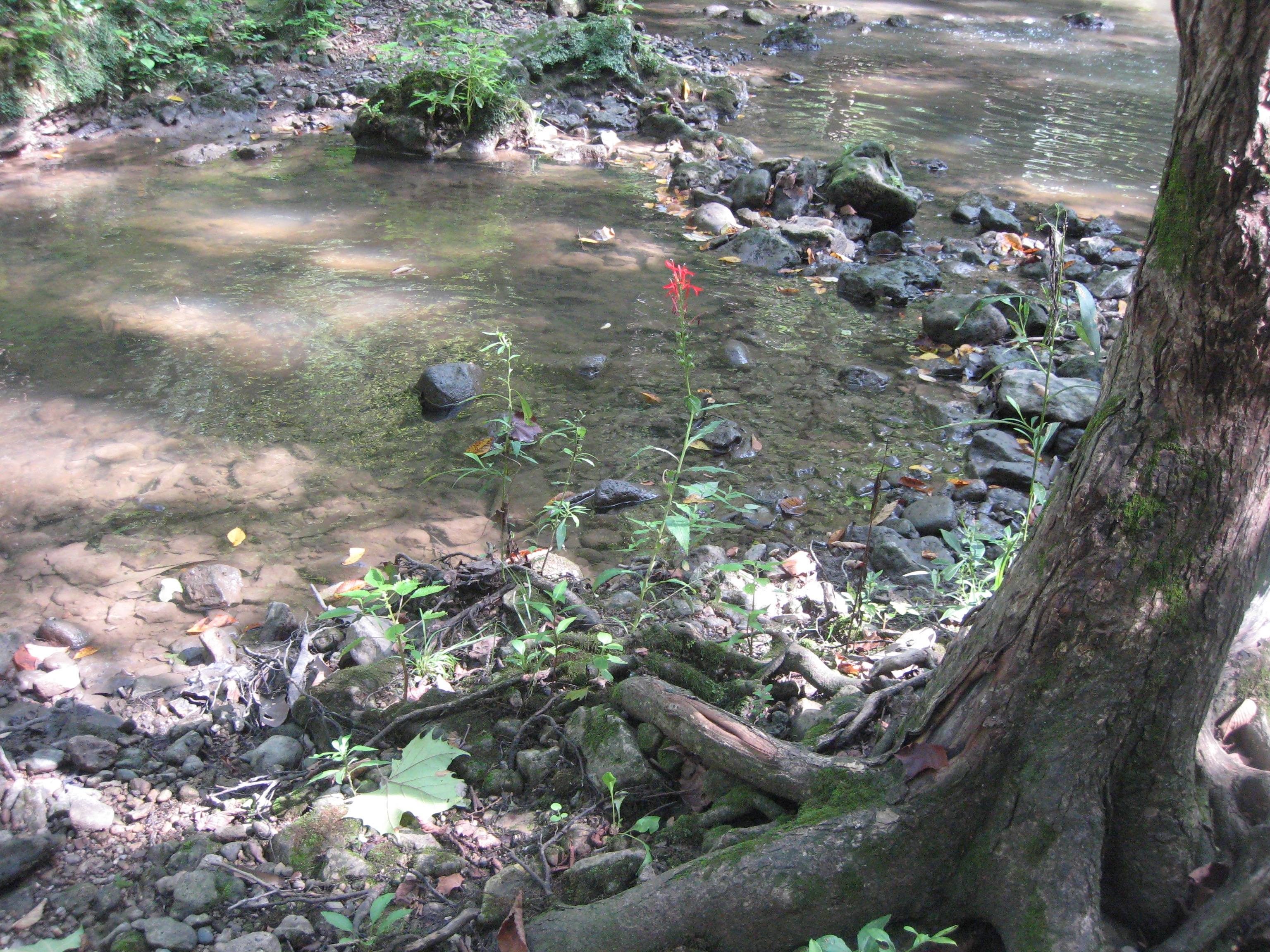 stream, red flower, and tree roots