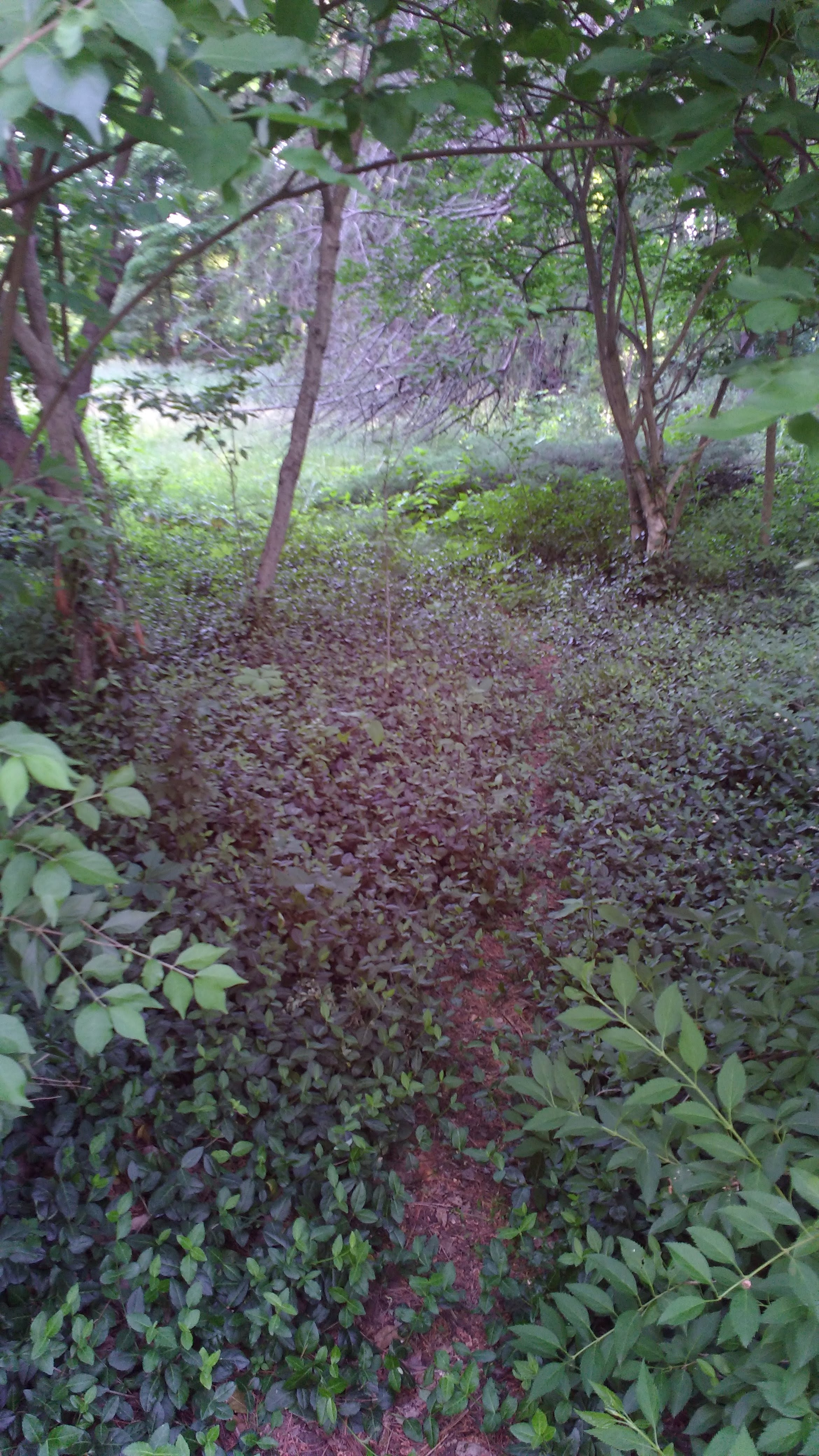 foliage-covered path leading into woody area