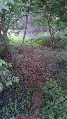 foliage-covered path leading into the woo