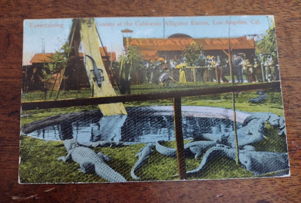 vintage postcard of California Alligator Farms, Los Angeles, Cal.